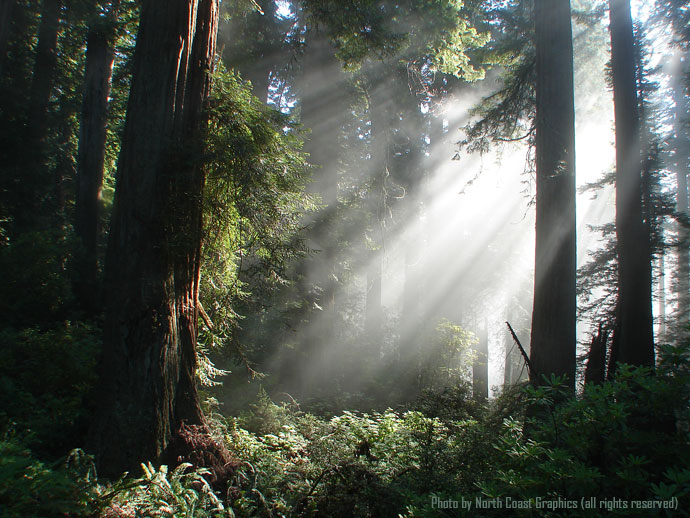 about humboldt redwoods